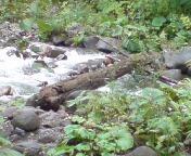 岩間川.JPG