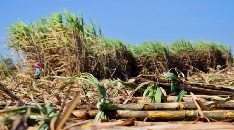 รง. น้ำตาลเตือนอุตฯ รับมือต้นทุนเอทานอลพุ่ง เหตุปริมาณอ้อยลด
