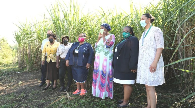 New sugar farming project creates 860 jobs in South Africa