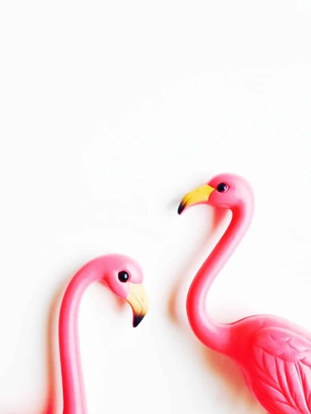 always flamingos