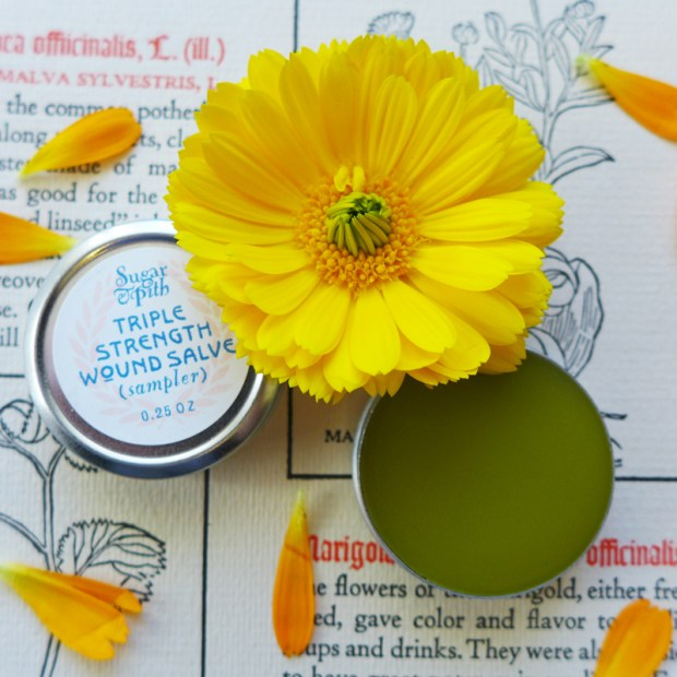 Sugar and Pith mini triple strength wound salve, four tins of salve on a book page with a calendula flower and petals