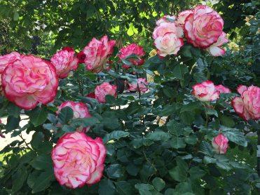 Blumenstadt Tulln