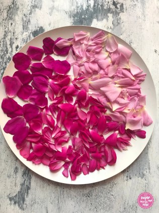 Rosenpetalen-trocknen
