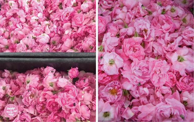 Damaszenerosenblüten-Duo.jpg