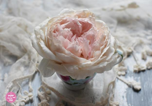 The-Wedgewood-Rose-in-Schale