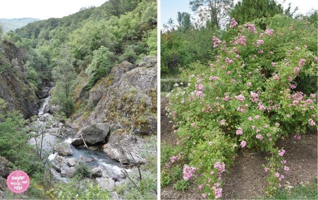 Weißer-Fluss-Rosen.jpg