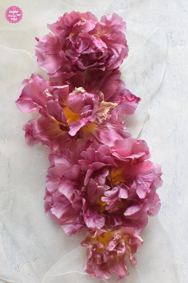 Vier rosa Tulpenblüten in Reih und Glied aufgelegt, leicht morbide mit ausgefransten Blütenrändern