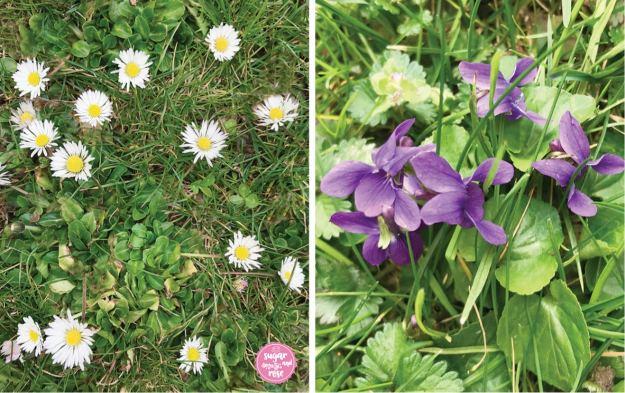 Gänseblümchen und Veilchen auf Wiese