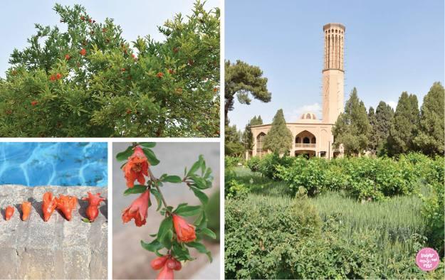 Granatapfelbäumen im Dowlat-Abad-Garten