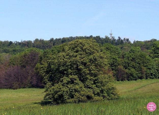 Blumenwiese in den Steinhofgründen, einem Erholungsgebiet in Ottakring, dahinter ein Wald und strahlend blauer Himmel
