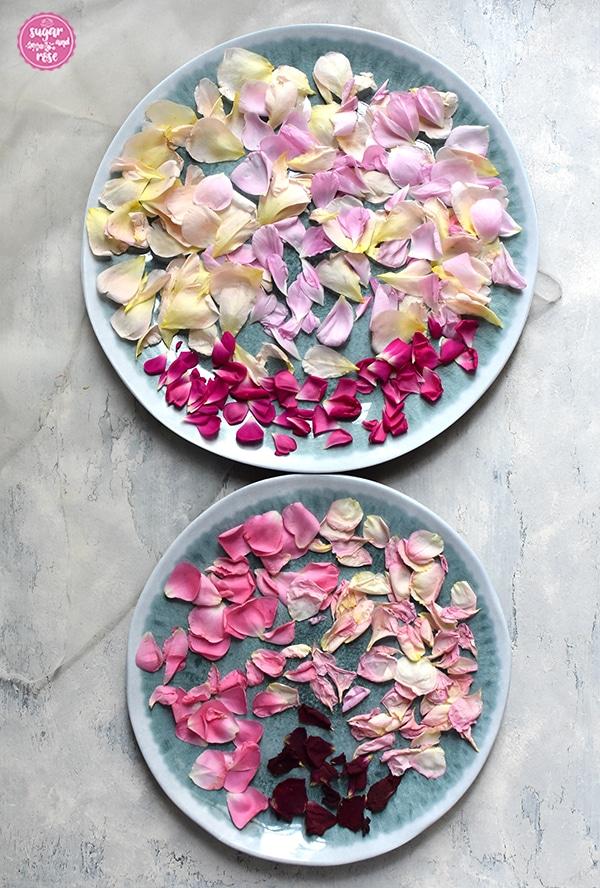 Zwei unterschiedlich große türkis-melierte flache Teller mit frischen Rosenpetalen zum Trocknen in unterschiedlichen Farben: apricot, rosa, rosa-gelb, pink, dunkelrosa und dunkelrot