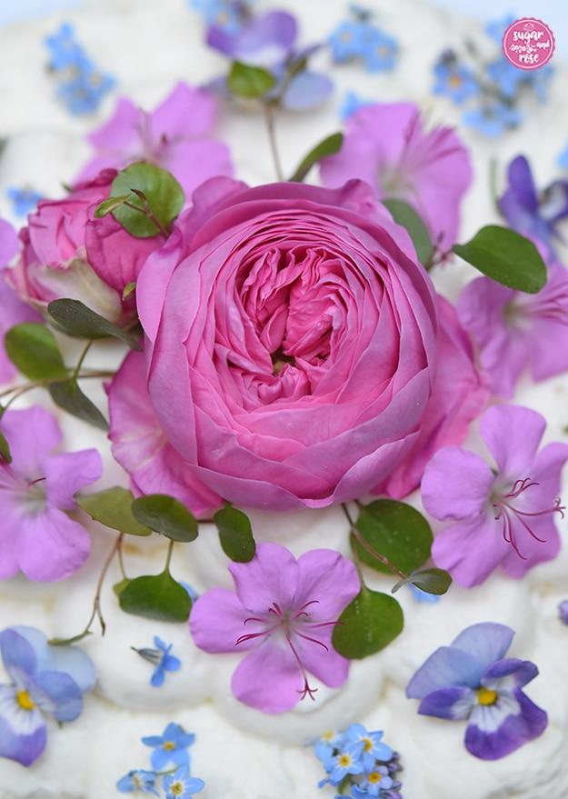 Eine Blüte der Rose Louise Odier, rosa Storchenschnabel und Vergissmeinnicht auf Topfencreme in Großaufnahme