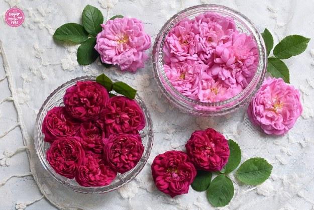 Zwei flache kleine Bleiglasschalen, eine gefüllt mit rosa Ispahan-Rosenblüten, die andere mit dunkelpinkfarbenen Blüten der Rose de Resht, daneben noch Blüten beider Rosen und die grünen Rosenblätter verteilt auf einem cremefarbenen Vintage-Spitzendeckchen mit Blütenstickerei. Diese beiden Rosen eignen sich für die Rosenküche.