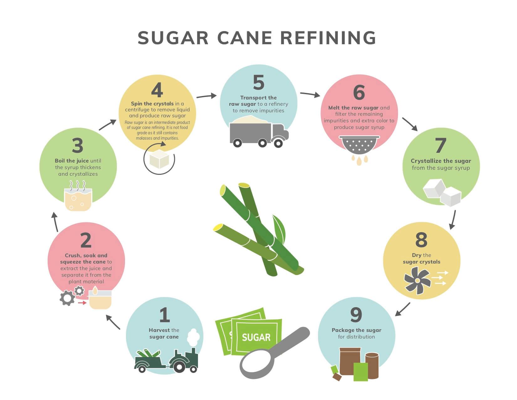 Sugar Cane Refining Infographic