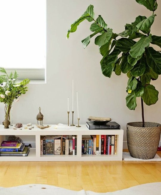fiddle leaf plant in basket in a pot next to a low level bookshelf with candles and a flower assortment