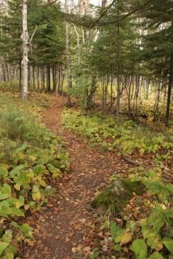 spruce balsamforest