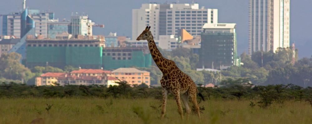 History and Stories Sugarpulp Nairobi Kenya