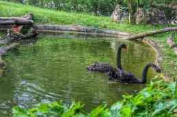 cebu-safari-zoo (15)