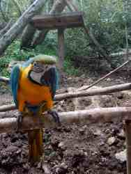 cebu-safari-zoo (17)