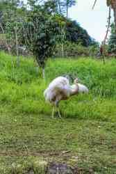 cebu-safari-zoo (2)