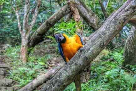 cebu-safari-zoo (6)
