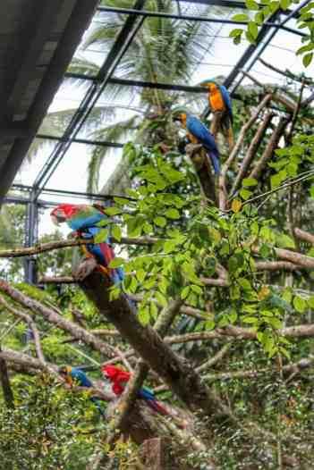 cebu-safari-zoo (9)