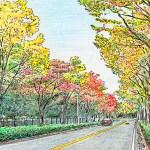 ケヤキ並木の画像