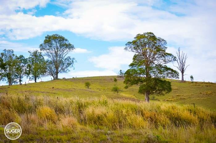 mary-valley-queensland-12