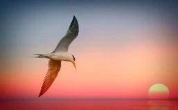 Gold Coast Birdlife