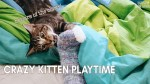 【犬猫動物動画まとめ】Kitten plays with bedsheets (lots of pouncing)