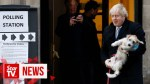 【犬猫動物動画まとめ】UK PM Johnson brings four-legged friend to cast vote