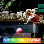 【犬猫動物動画まとめ】A True story of Faithful Dog | Best Companion Ever|
