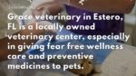 【犬猫動物動画まとめ】Get the Professional Pet Hospital in Estero