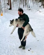 【犬猫動物動画まとめ】Human Helps Husky Do Number Two