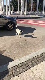 【犬猫動物動画まとめ】Protective Pooch Helps Kids Cross
