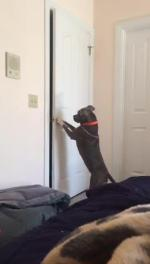 【犬猫動物動画まとめ】Dog Opens The Door And Goes Out
