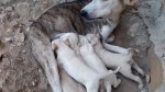 【犬猫動物動画まとめ】Mom Dog Nursing Their Cute Baby Puppies-The Puppies Feeding Their Mother's Milk-Dog Puppy