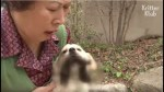 【犬猫動物動画まとめ】Sad Reason Why A Dog Who Lost Her Puppy Begs To Let Her Go Outside Is (Part 1) | Kritter Klub