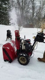【犬猫動物動画まとめ】Silly Pup Plays with Snow Blower