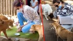 【犬猫動物動画まとめ】Bollywood Actresses Feeding Stray Dogs During Lockdown