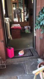 【犬猫動物動画まとめ】Family Celebrates Grandma's Birthday Amidst Pandemic While Social Distancing