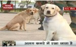 【犬猫動物動画まとめ】Here's how Indian Army trains its Dog Squad in Meerut's RVC centre