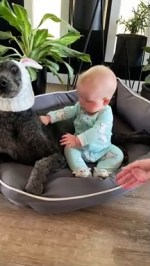 【犬猫動物動画まとめ】Dog Doesn't Like Easter Outfit As Much As Infant