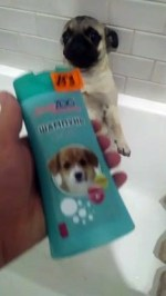 【犬猫動物動画まとめ】Dog Loves To Take Showers While Standing
