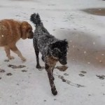 【犬猫動物動画まとめ】KAR ve iRAN COBAN KOPEKLERi - SNOW and iRANiAN SHEPHERD DOGS
