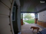 【犬猫動物動画まとめ】Doorbell Camera Catches Lady Falling