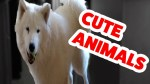 【犬猫動物動画まとめ】Funniest Cute Animal Home Video Bloopers _ Funny Pet Videos