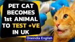 【犬猫動物動画まとめ】Coronavirus: Pet cat becomes first animal to test positive for COVID-19 in UK | Oneindia News