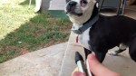 【犬猫動物動画まとめ】Dog Faces Off Against the Air Compressor