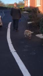 【犬猫動物動画まとめ】Happy dog Wags Tail and Grooves as Owner Takes Them for Walk